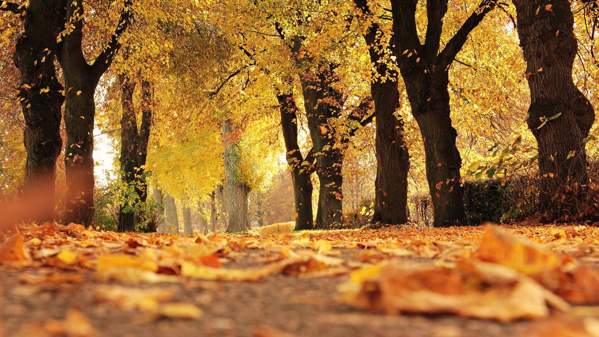 картинки про про осень огромного