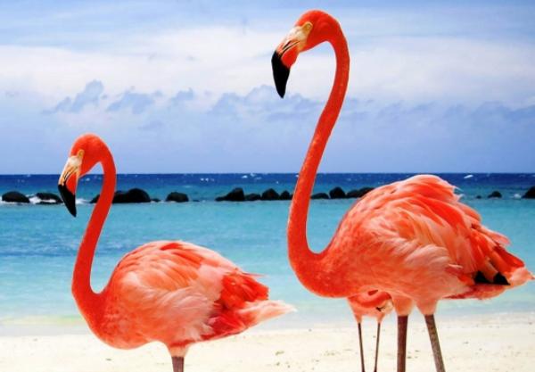 Всё о красном фламинго для детей