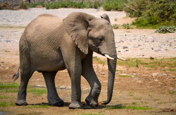 Все о слонах детям